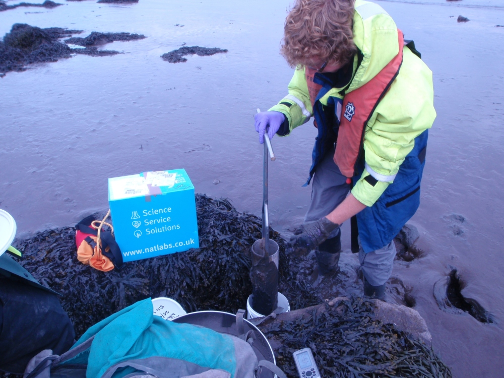 Taking benthic samples from the adjacent foreshore in June 2014